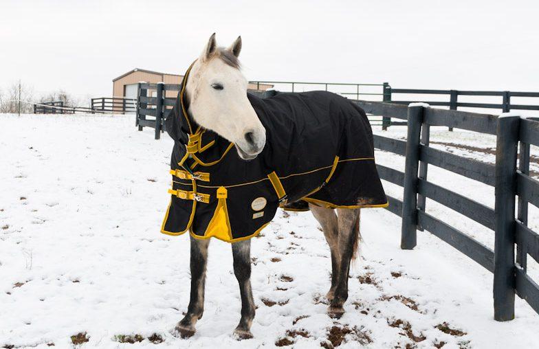 Конь в пальто – чугунный страж рабочего стола